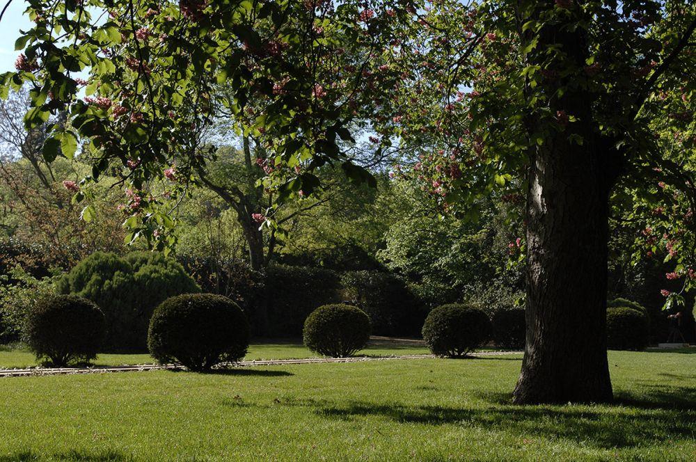 Am nagement et entretien de jardin alpilles luberon m randal - Amenagement petit jardin rectangulaire saint etienne ...